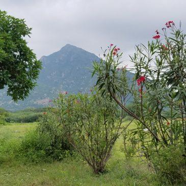 Tiruvannamalai, October 2019