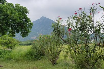 Arunachala From The Farm