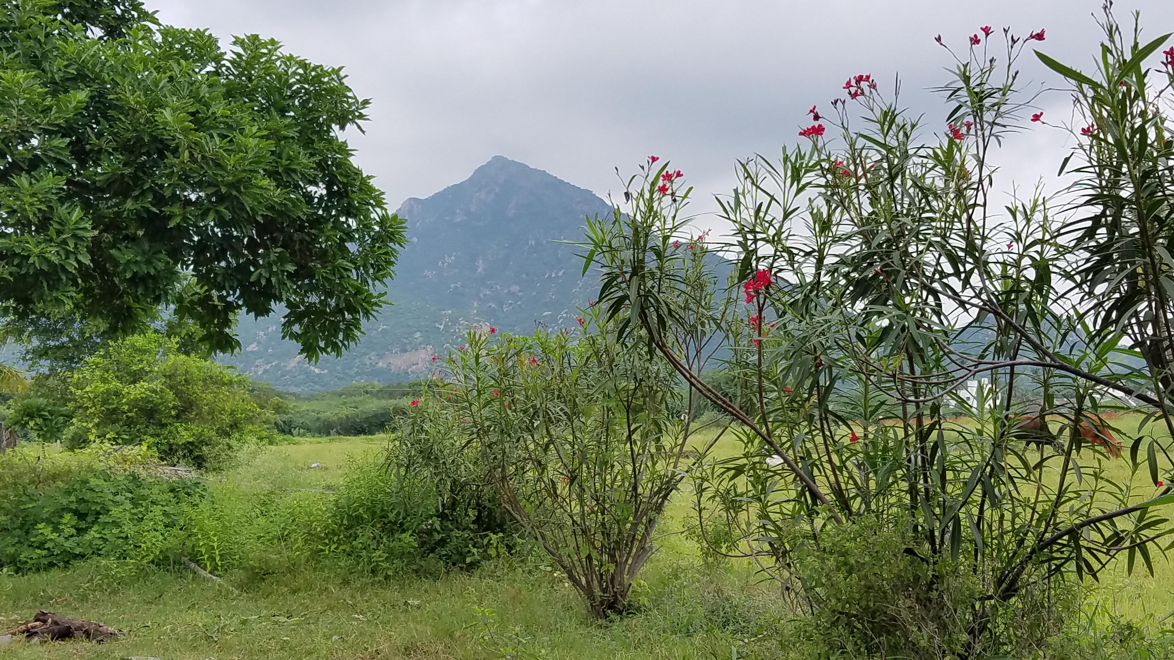 Arunachala From The Farm
